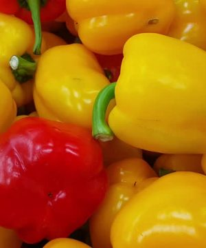 Red and Yellow Bell Pepper